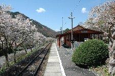 だいぶ花は散っていました。・・・が、満開の桜で埋まる駅を想像するのは決して難しくない。