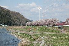 道の駅から見えるものの、なかなか着けそうで着けない桜並木でした。