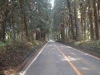 JR日光線 文挟駅前が杉並木。列車の方も行けます。