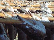 漁港のあちこちで干物が干されていて、雰囲気満点です。