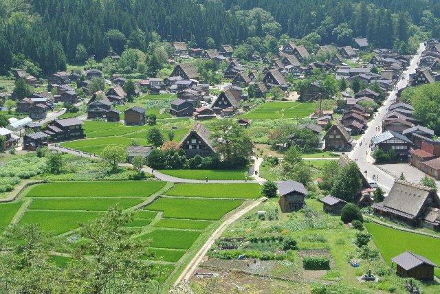 合掌造り集落の周りに広がる水田の緑が美しく集落を彩っていました。