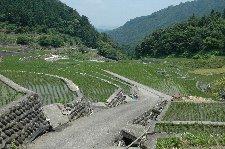 石垣で築かれた棚田には重厚感があるし、守らないといけないという意識にもなる。
