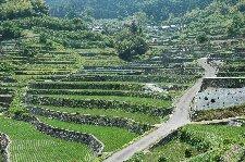 田植えが終わり、稲が成長し始めた6月、青々とした棚田もまた美しい。