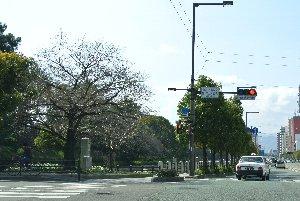 左に見えるのが松山城を含む公園になります。