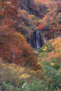 田子倉湖周辺ではここの紅葉が一番のお気に入りです。