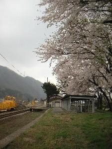 桜吹雪の中、なかなか来ない列車を待つのも良いなぁと思う。