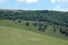 風力発電所へと続く、山の稜線には美しい放牧地が続きます。