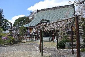 残念ながら、見頃を少し過ぎていたようで、葉桜となっている木が多かった。