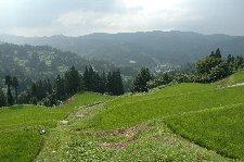 夏の青々とした水田も好きですが、やはり稲刈り前の黄金色の水田を見てみたい。