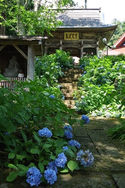 見所は石段沿いの紫陽花だけで、本堂周辺にはあまり見るべきものがなかった。