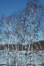 岩洞湖の湖面、結氷しているのがわかりますか?