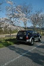 桜前線を追いかけるのは、春の東北遠征の醍醐味です。