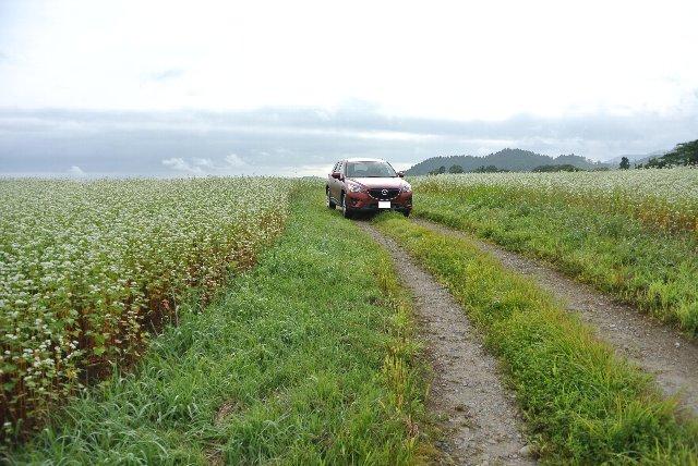 農道に車を乗り入れ、その広さを実感してみる。