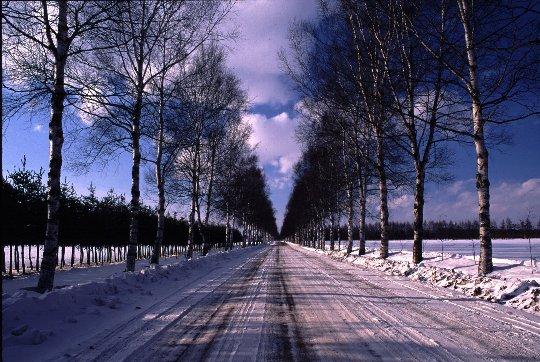 十勝に帰った時、必ず通る白樺美林。いつも変わらぬ風景にほっとします。白樺と、空の青との調和が素敵でしょ。