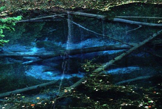 池の底から水が湧き出るのがわかるほど透明度が高い。