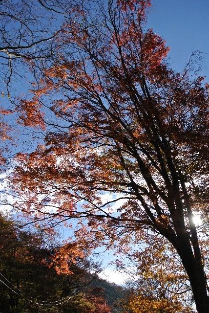 逆光を活かして、葉を透かして撮ってみました。