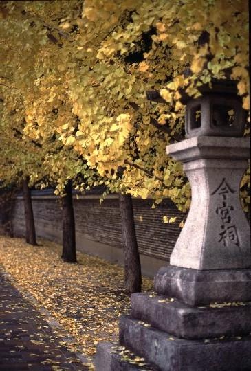 金閣寺、北野天満宮方面まで足を延ばす機会があるなら、是非今宮神社にも立ち寄って見ましょう。