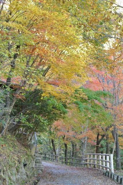 駐車場から滝へ向かう遊歩道沿いの紅葉が見事でした。