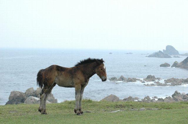 寒立馬達は狭い場所に群れて過ごしている。人懐っこい馬には癒されます。