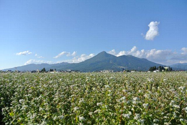 蕎麦の花の香りを楽しめる素晴らしさが、猪苗代町にあった。
