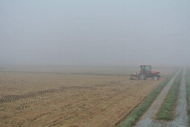 農地の中を伸びる一筋の畦道が良いアクセントになっています。
